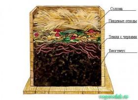 как развести червей в огороде
